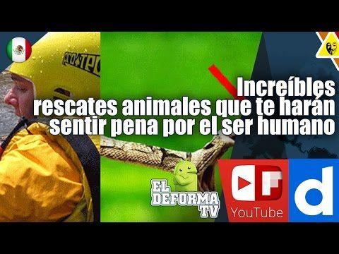 Increíbles rescates animales que te harán sentir pena por el ser humano