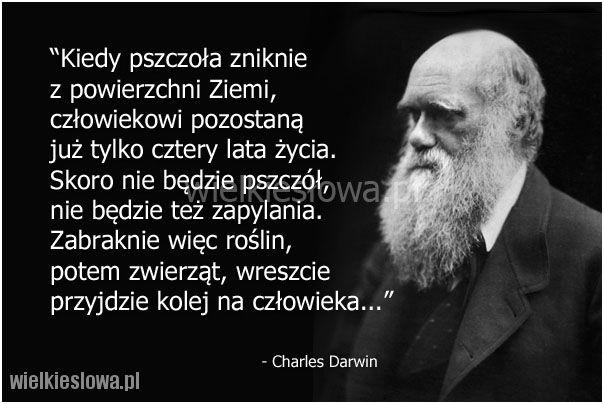 Kiedy pszczoła zniknie z powierzchni Ziemi... #Darwin-Charles,  #Alkohol-i-nałogi, #Przyroda-i-zwierzęta