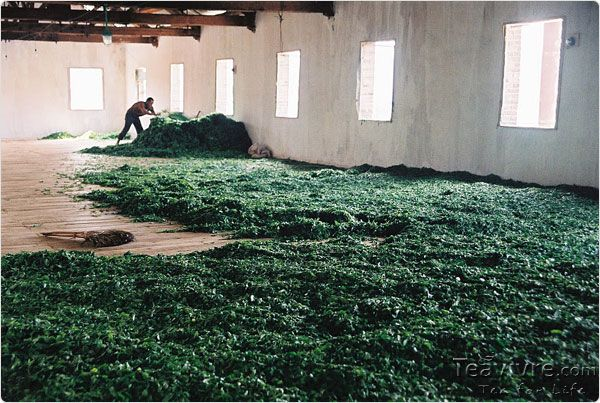 How Pu-erh Tea is made. Great article and pictures.
