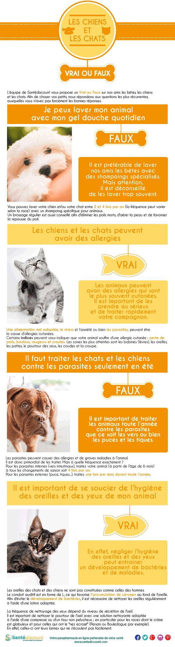 Vrai ou faux sur les chiens et les chats ! #infographie #datadesign #chienchat #pets #vraifaux