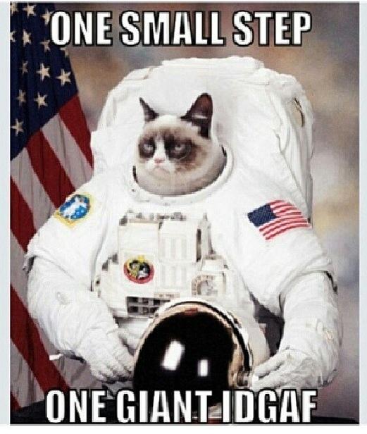 cat dressed as astronaut - photo #30