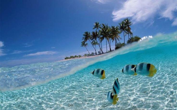 Água transparente para ver estes peixinhos? Aqui em Cherating é bem comun!