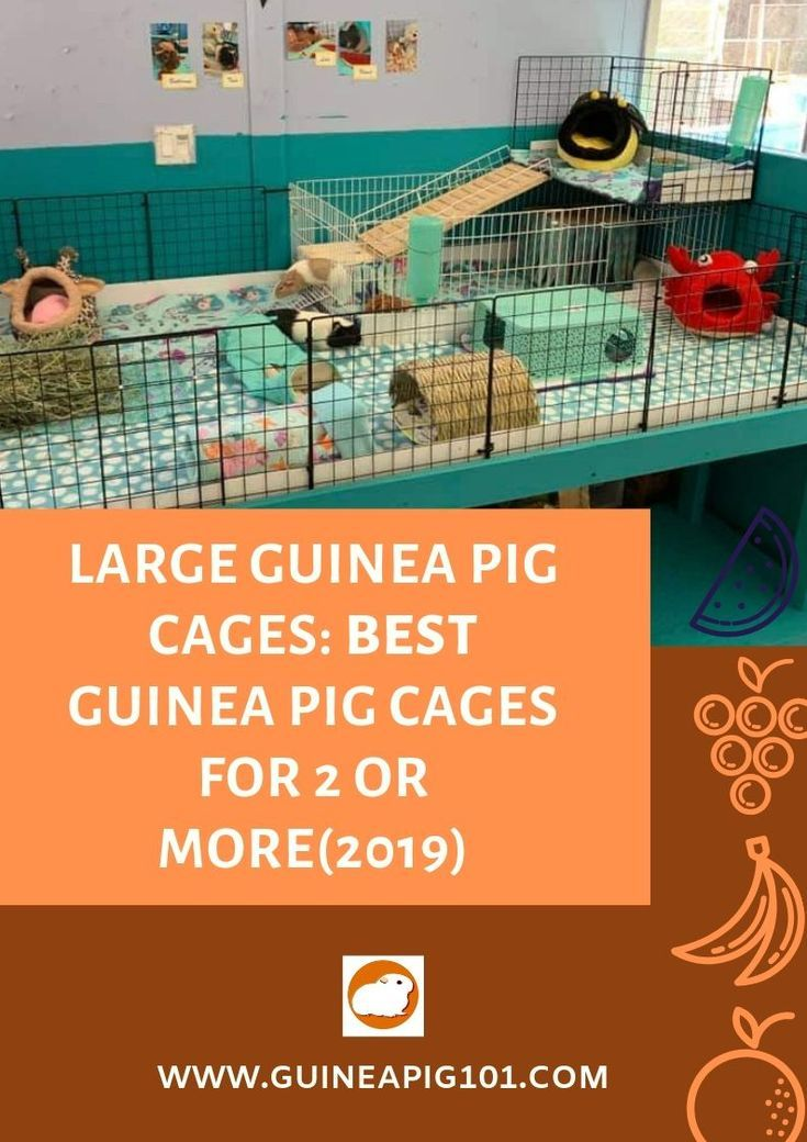 Pin On Rabbits And Guinea Pigs