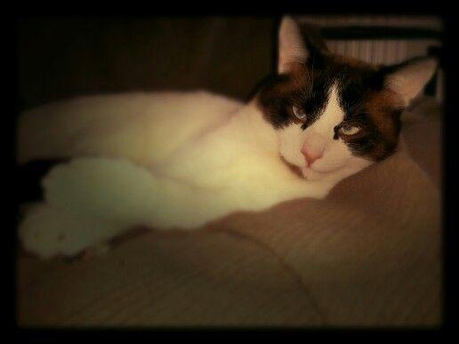 Festeggio #primomaggio #Goku #cat #sleep #holiday