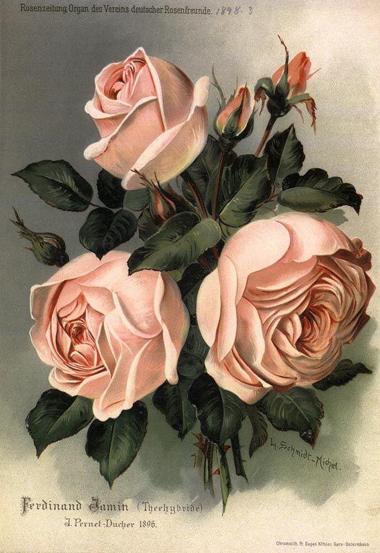 1806 Roses Postcard
