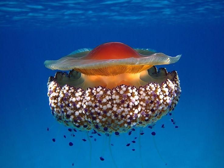 20 photographies qui dévoilent la beauté fascinante des méduses   Daily Geek…