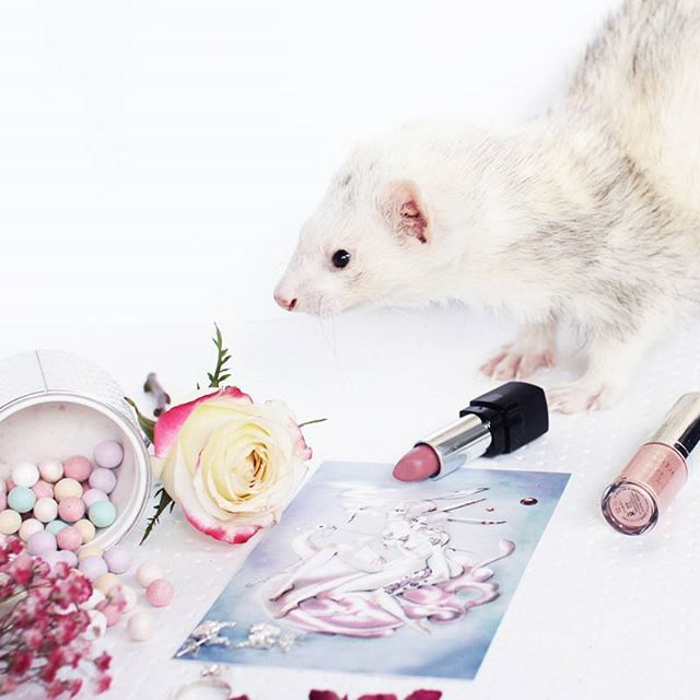 Have you ever met Willy ? He is our little Rescue Ferret We adopted last summer ! He is 6-7 years old. He usualy sleeps the whole day but since we were up to some serious stuff he decided to come around and play on our photoshoot set ! Little Devil You !