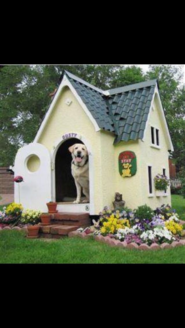 24 Best Amazing Dog Kennels Images On Pinterest Animals Amazing