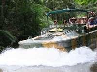 Army Duck Rainforest Tours
