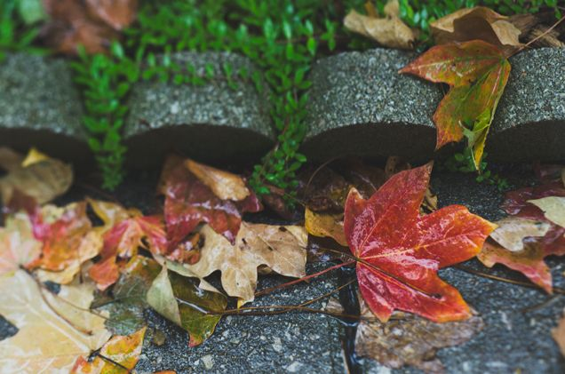 Lovely focus and beautiful saturated colors, thanks to a rainy Chicago day. Loving @Rebecca Nichols's pretty fall photos!