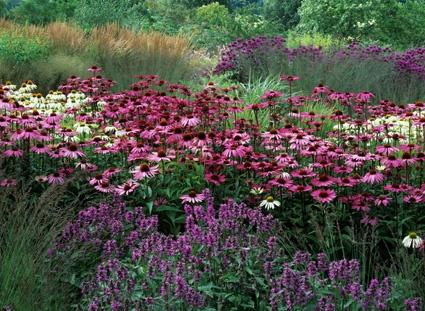This is very much like one of my gardens. Echinacea, grasses, magenta, white, purple