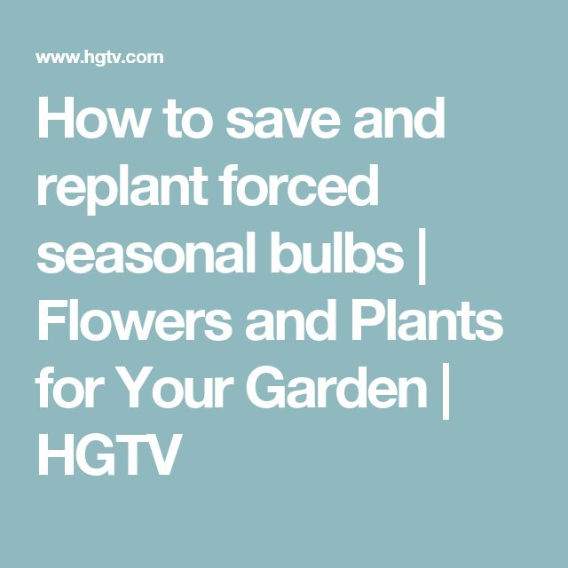 How to save and replant forced seasonal bulbs | Flowers and Plants for Your Garden | HGTV