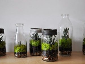 A closed terrarium requires very little care, like these terrariums from Pop Montreal