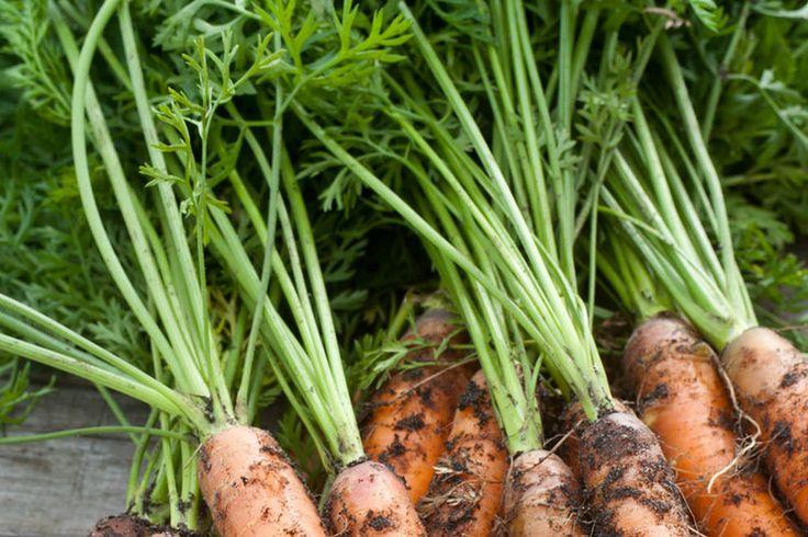 Zelf wortelen kweken