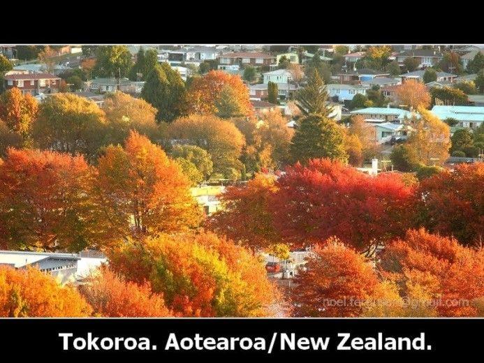 Tokoroa Autumn Colours