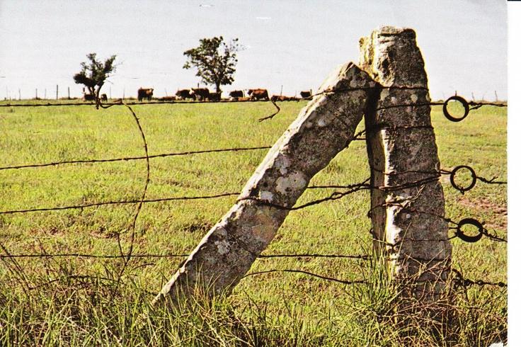 Kansas Limestone Fence Post