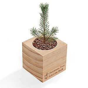 Canadian Christmas Trees by MouseGarden on Etsy