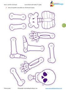 """Los huesos del cuerpo humano """"Segundo grado"""""""