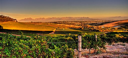 South Africa`s Top 10 Wine Routes