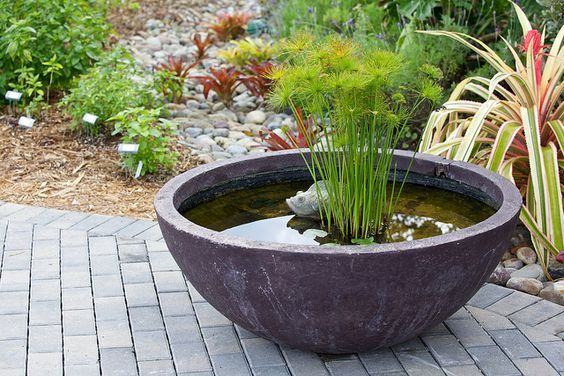 Small water feature in a pot featuring dwarf papyrus - perfect for the patio! www.ContainerWaterGardens.net