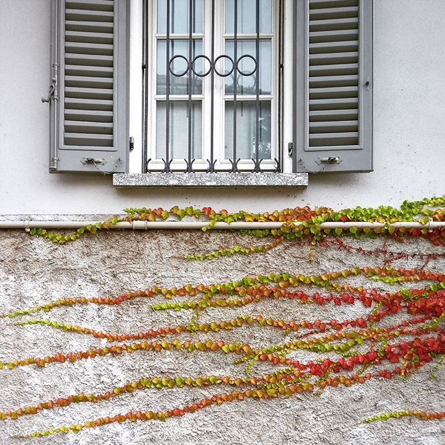 #window #wall #plant #red #green #shotonmylumia #shotonlumia #lumiaphotography #colors #finestra #pianta #muro #verde #rosso #colori #instagood #instamood #instagrammers #igers #igersitalia