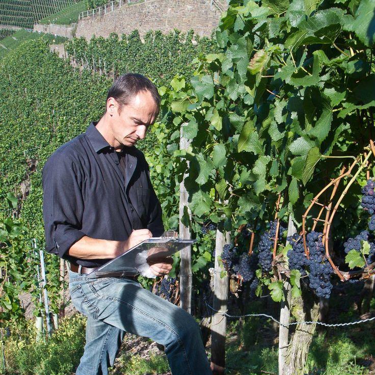 Albert Schamaun, Winemaker of H. J. Kreuzberg, Ahr, Germany with the wonderful Pinot Noir.
