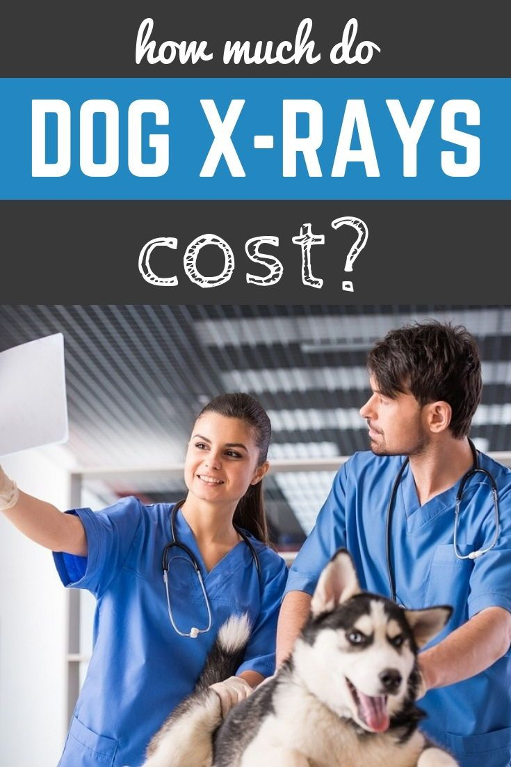 How Much Do Dog X Rays Cost Dog Health Tips Dog Care Dogs