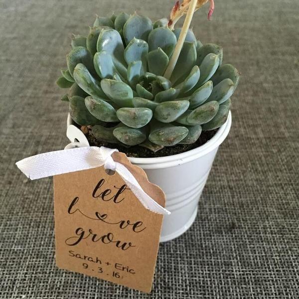 17 best ideas about wholesale succulents on pinterest wedding succulent plants wedding favors. Black Bedroom Furniture Sets. Home Design Ideas