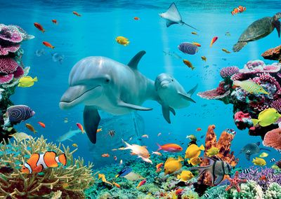 Tropical Underwater Ocean