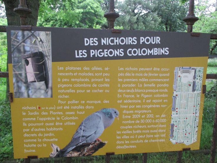Botanic Garden - Nests for the stock dove
