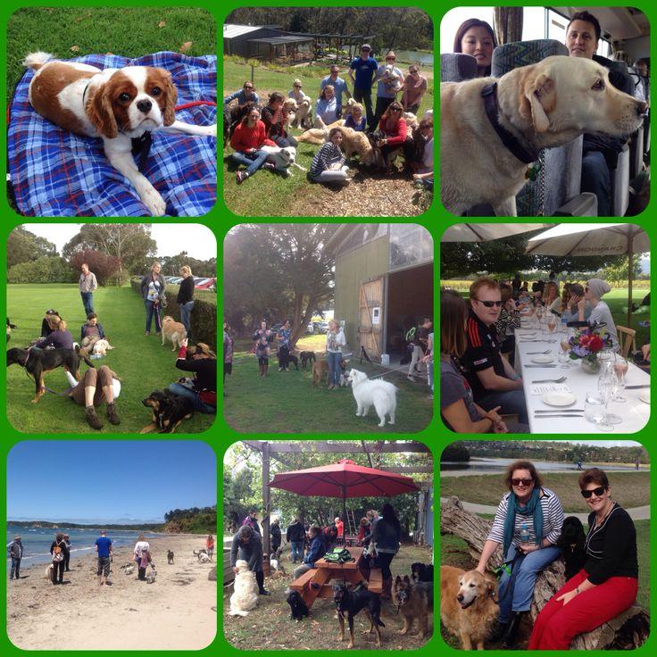 Dog friendly winery tours