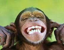 lachende aap -