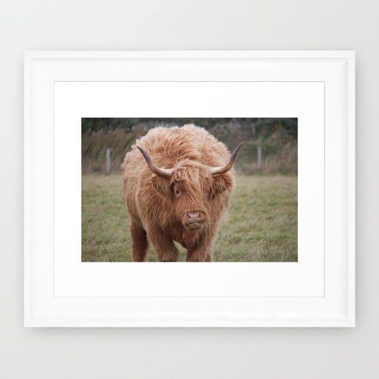 Highland Cow - Society 6