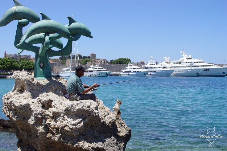 Once in #Rhodes, #OdysseasTheCat got a bit hungry from the trip. But the locals are ready to welcome him with fresh fish!