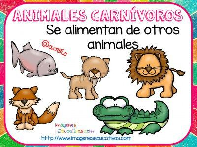 10 best animales images on Pinterest