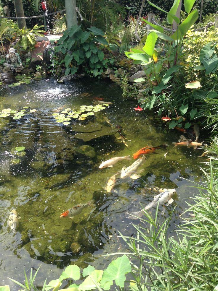 The koi pond at the fish hole miniature golf bradenton for Mini koi pond