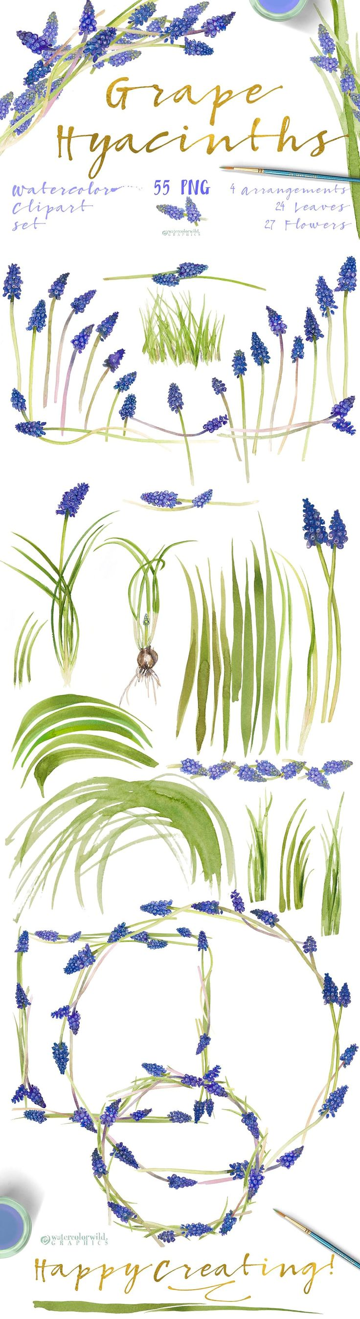 Grape Hyacinths_Blue Spring by watercolorwild.graphics on @creativemarket