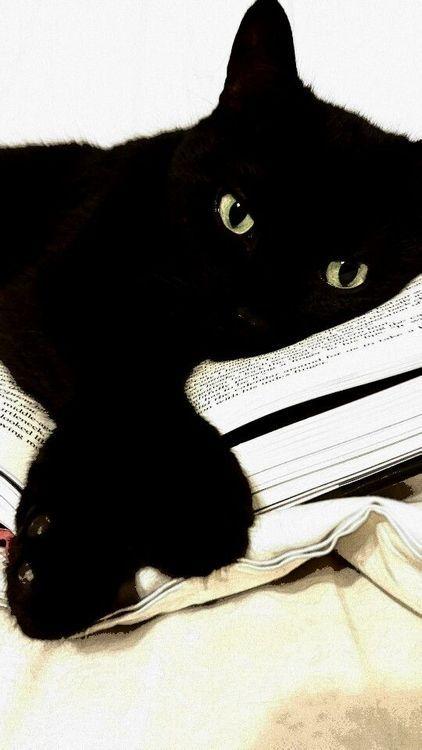 black #cat #library #blackcatsrule