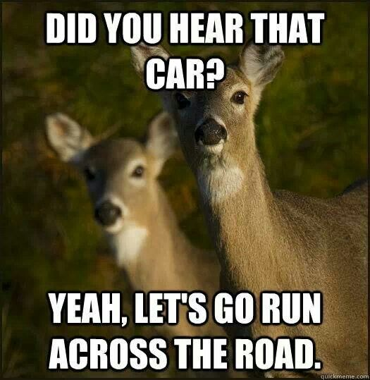 deer hunting memes - photo #27