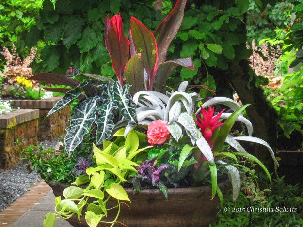 Container Garden Design the first ingredient is an attention grabbing plant also called a thriller this plant takes center stage in a container serving as the star of the design Find This Pin And More On Container Gardens