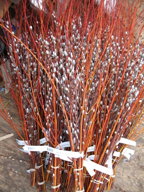 Flame willow and Curly willow bouquets.