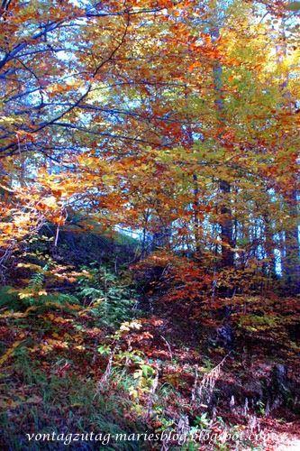 Wald im Semmeringgebiet