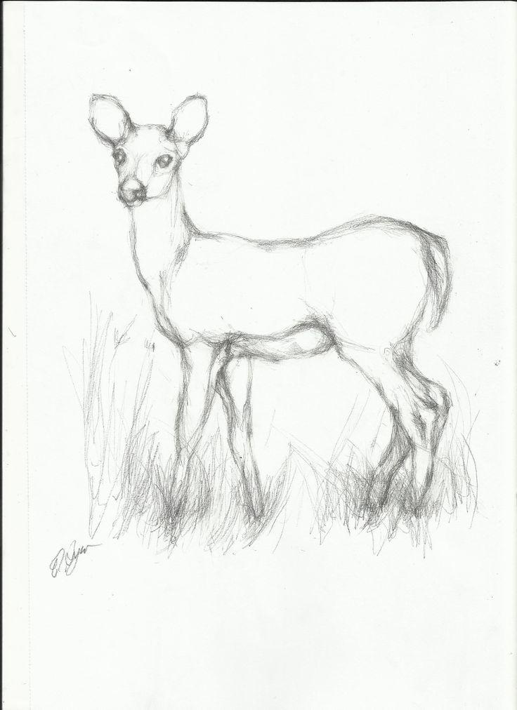 deer easy drawing drawings realistic simple line animal google