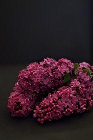 Violet lilac Bez