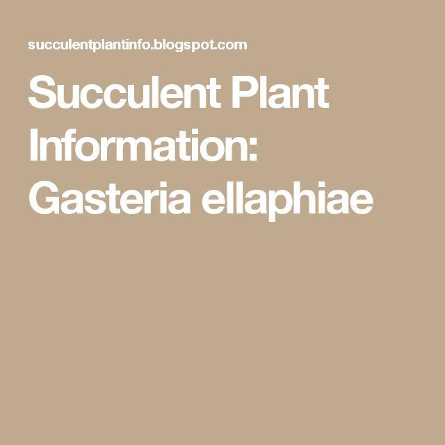 Succulent Plant Information: Gasteria ellaphiae