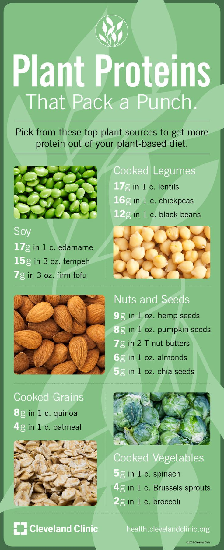 Plant Proteins that Pack a Punch (Infographic)