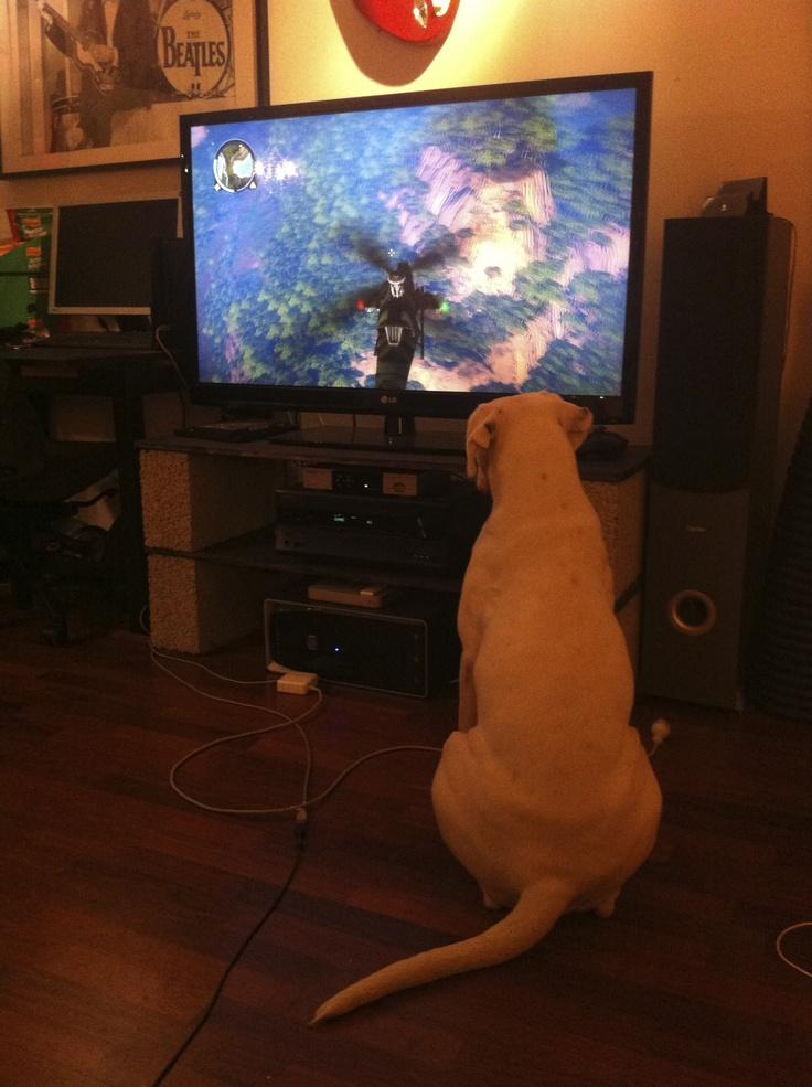 #lulu #gamedog