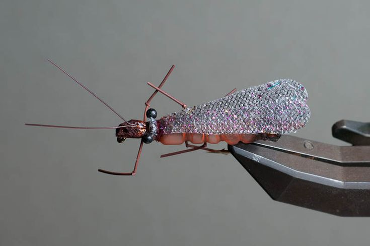 Salmon fly, top view - Tied by David Cowardin