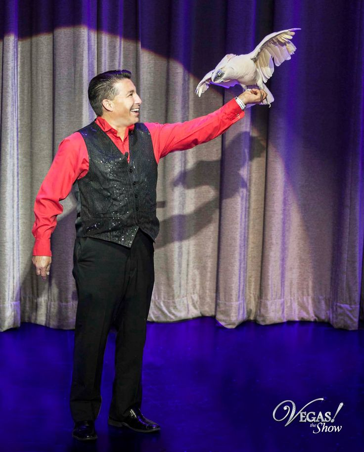 "In 2012 Clint was a top 10 semi-finalists on  "" America's Got Talent "". He performed a one of a kind stunt with his free flying parrot ""Kitty"".  #agt #americasgottalent #vegastheshow #lasvegas"