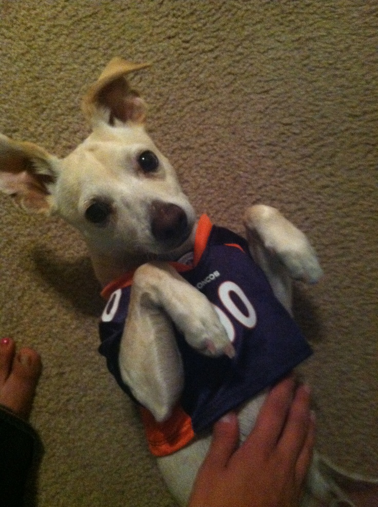 1000+ images about Pet Sports Fans on Pinterest | Colleges ...